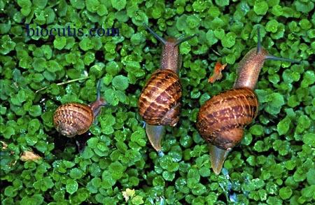 escargots-biocutis