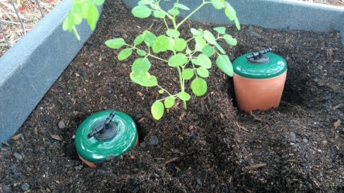 Australian Never Forget Water Irrigation System Released Ideal for Moringa Tree
