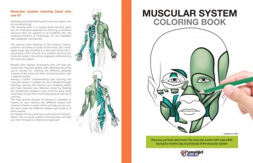 human body coloring book recognize the complexities of the muscular system - Human Body Coloring Book