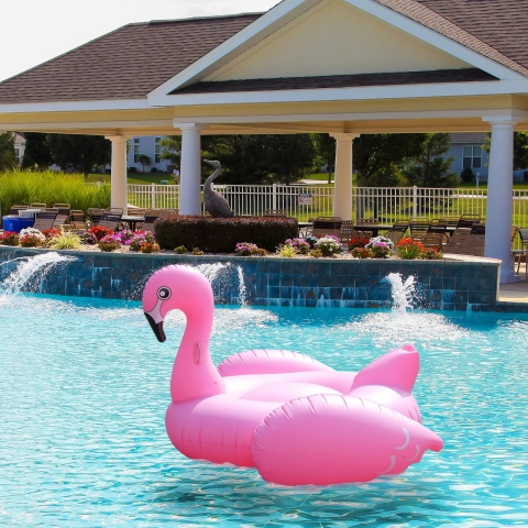 Teddy Shake Offers Free Shipping For Flamingo Float Through Amazon Partnership