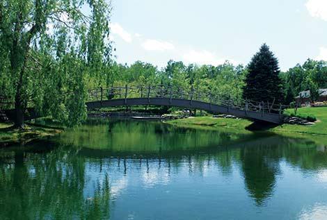 Fish pond management article reveals surprising facts for for Garden pond management