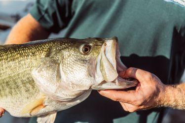 Stock Fish in Private Fort Worth & DFW Texas Lakes and Ponds for